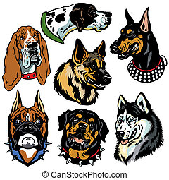 ensemble, têtes, chiens, icônes