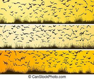 ensemble, troupeau, oiseaux, bannières horizontales, sunset.