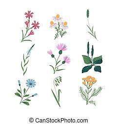 ensemble, vecteur, fleurs