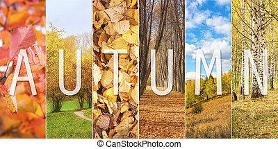 ensemble, vertical, collage, texte, automne, sous-titre, ...