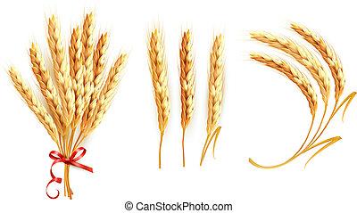ensemble, wheat., vector., oreilles