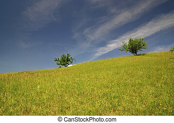 ensolarado, árvore, prado, Dia