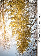 ensolarado, árvores reflexão, água