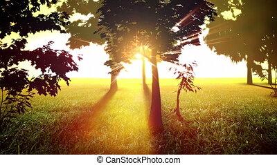 ensolarado, árvores, volta