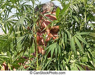 ensolarado, cannabis, bush, bronzeado, dia, verão, homem