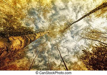 ensolarado, floresta