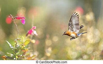 ensolarado, fundo, com, pássaro, vôo
