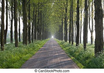 ensolarado, maneira, em, árvore, túnel