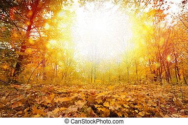 ensolarado, parque, dia, outono