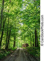 ensolarado, primavera, em, a, floresta verde, polônia