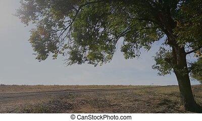 ensoleillé, été, day., arbre, vue