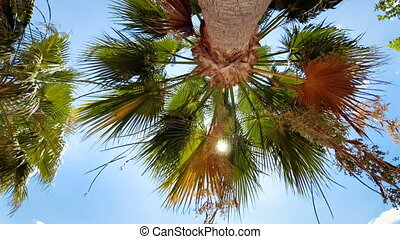 ensoleillé, arbre, élevé, clair, paume, terrestre, jour, vue