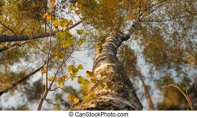 ensoleillé, arbre, haut, regarder, baldaquin, jour