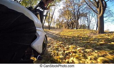 ensoleillé, automne, motocyclette, équitation, jour, route, forêt