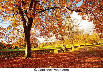 ensoleillé, beau, parc, automne