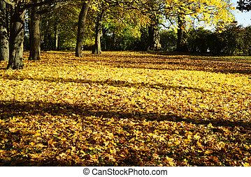 ensoleillé, feuilles, parc, jaune, jour automne