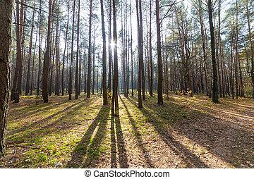 ensoleillé, forêt automne, arbres, paysage, jour, parc