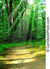ensoleillé, forêt