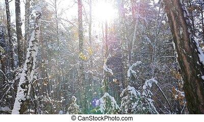 ensoleillé, hiver, jour, forêt