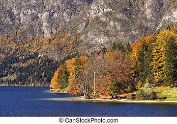 ensoleillé, lac, slovénie, automne, bohinj, jour
