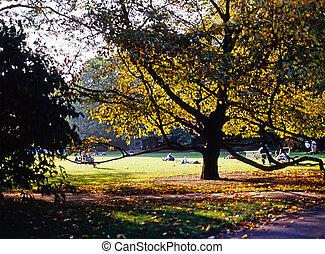 ensoleillé, parc, jour
