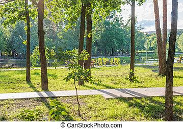ensoleillé, parc, vert, banc