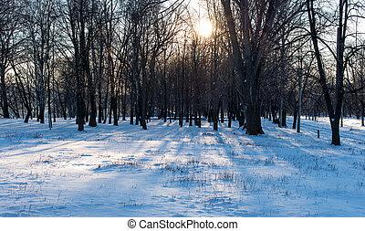 ensoleillé, paysage hiver, jour