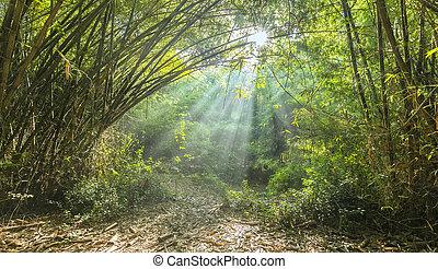ensoleillé, tôt, forêt bambou