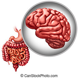 Enteric Nervous System - Brain digestive function and gut ...