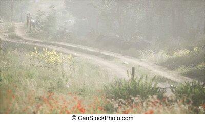entering, утро, стоять, туманный, хвойный, лето, sunbeams