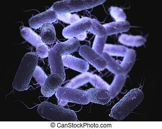 Enterobacteriaceae: large family of Gram-negative bacteria...