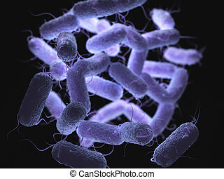 Enterobacteriaceae: large family of Gram-negative bacteria...