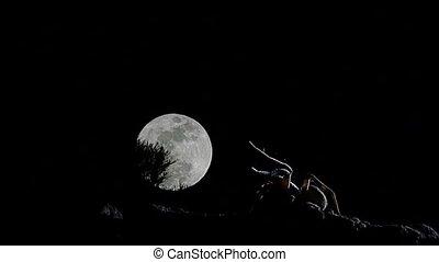 entiers, araignée loup, lune