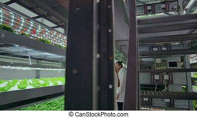 entiers, fonctionnement, étudier, légumes, plantation.,...