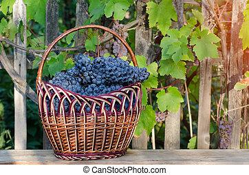 entiers, fond, mûre, vigne, raisins, panier, jardin
