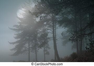 entiers, forêt, lune
