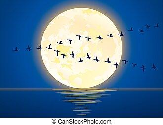 entiers, migrateur, illustration, lune, vecteur, levée, oiseaux