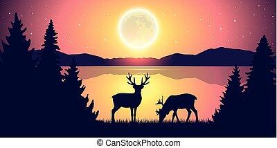 entiers, nature, ciel étoilé, lac, deux, reindeers, nuit, lune, paysage