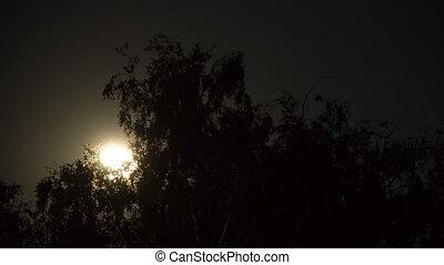 entiers, nuages, arbres., timelapse, ciel, lune, sombre, par, nuit, mouvements