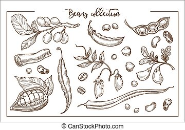 entiers, organique, protéines, collection, frais, haricots, monochrome, naturel