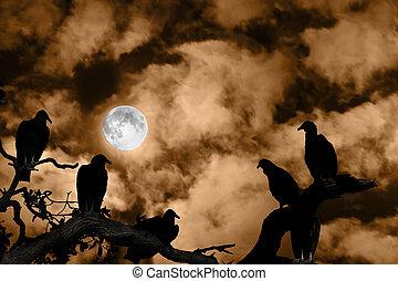 entiers, silhouetted, spooky, ciel, contre, lune, orange, vautours