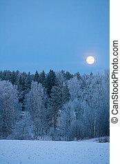 entiers, sur, gelée, lune, forêt, couvert