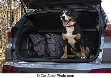 Dog sitting in the car.