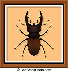 Entomological exhibit - Stag Beetle in the frame. Vector illustration.