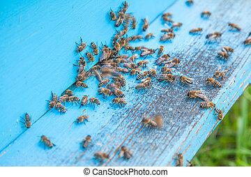 entrada, abejas, apiary., colmena, luz, enjambrando, azul