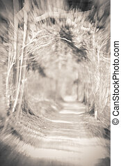 entrada, lensbaby, efecto, escalofriante, hipnótico, bosque