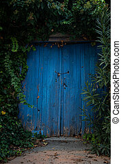 Entrance gate of an abandoned house with a blue wooden door covered with green plants