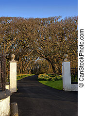 Entrance Gate with White Pillars and Driveway leading into Forrest with Blue sky