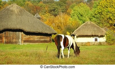entre, maisons, ukrainien, traditionnel, cheval frôlant, village, vieux