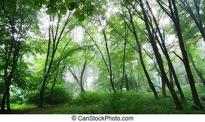 entre, verse, pluie, clairsemé, bas, arbres, son, forêt